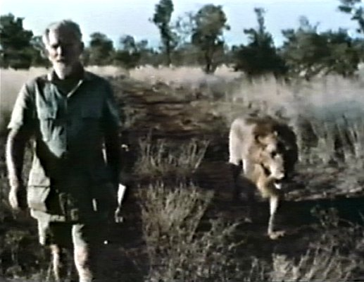 George_Adamson_WalkingWithLion_LAF_025_Cr.jpg (41360 bytes)